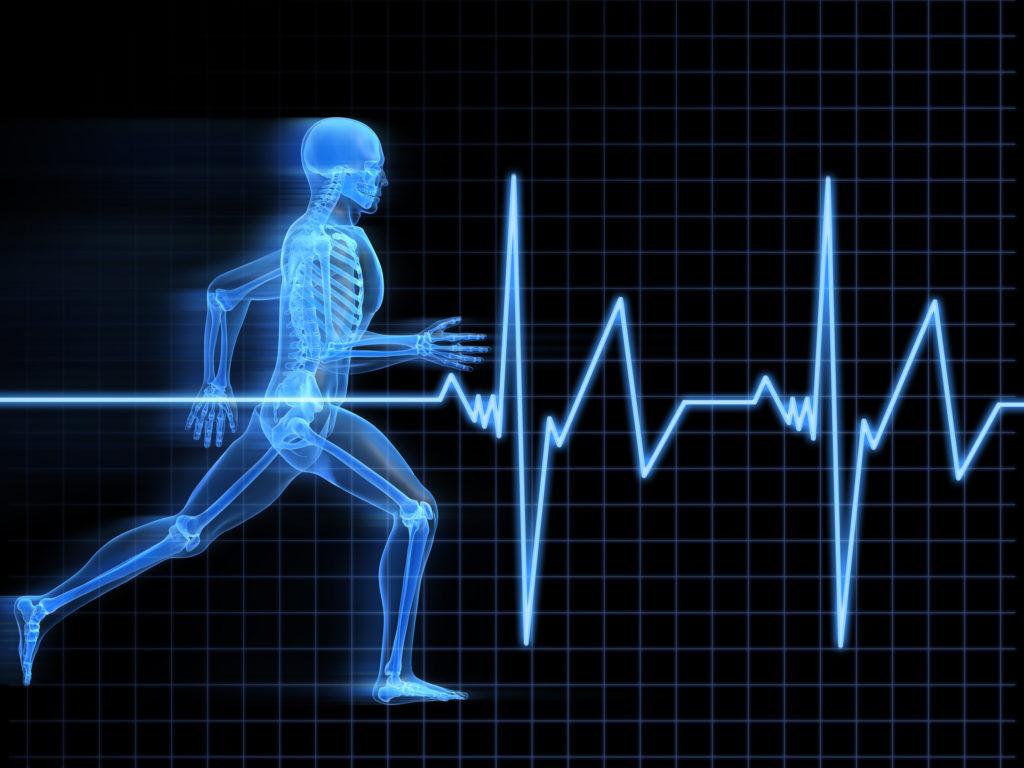 Die Herzfrequenzvariabilität als Leistungsindikator