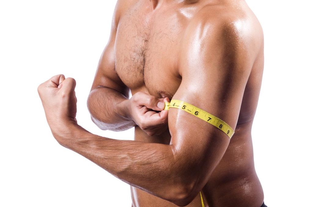 Muskel, Muskelwachstum