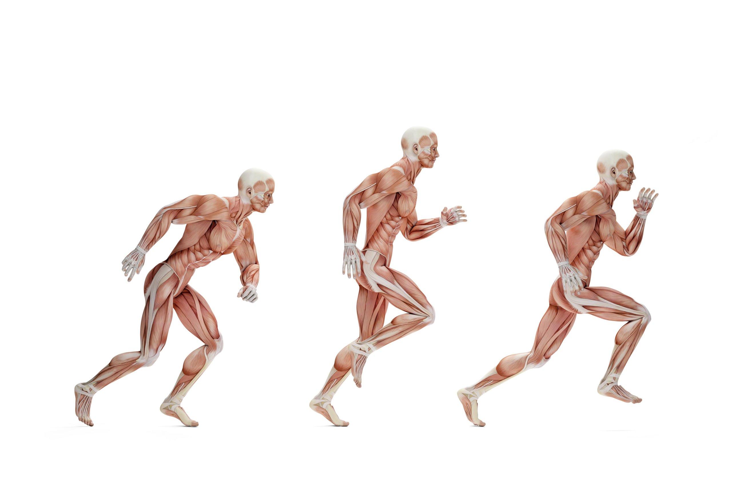 Sehnen und Training – Das solltest Du wissen