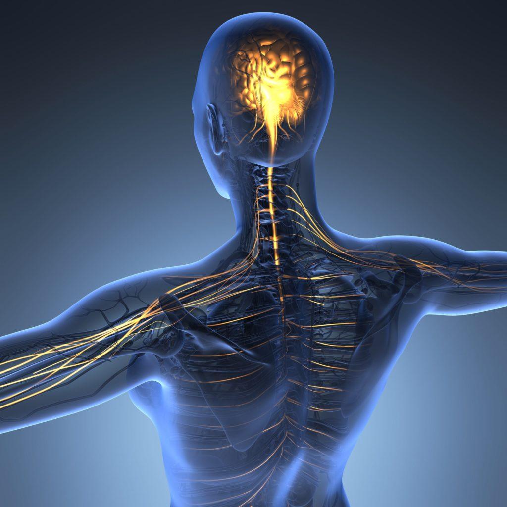 Das Gehirn spielt bei der Körperwahrnehmung die entscheidende Rolle