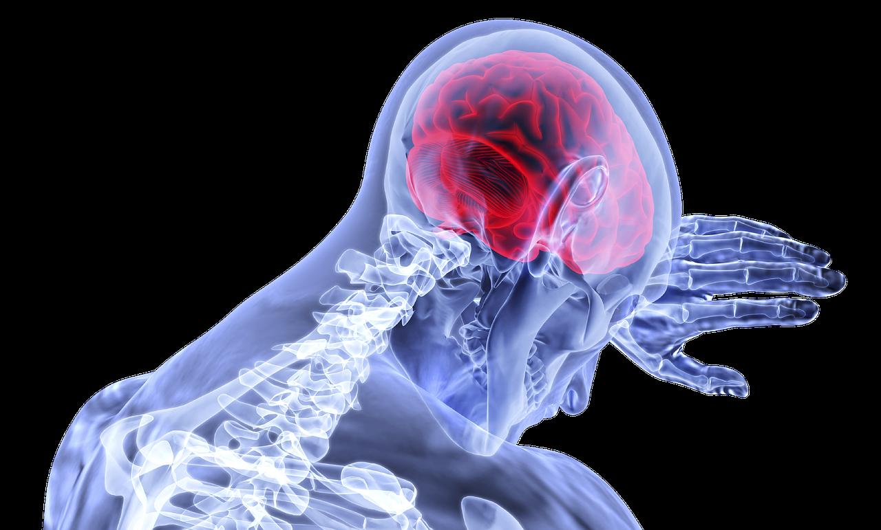 Bewegungsmangel schadet auch dem Gehirn
