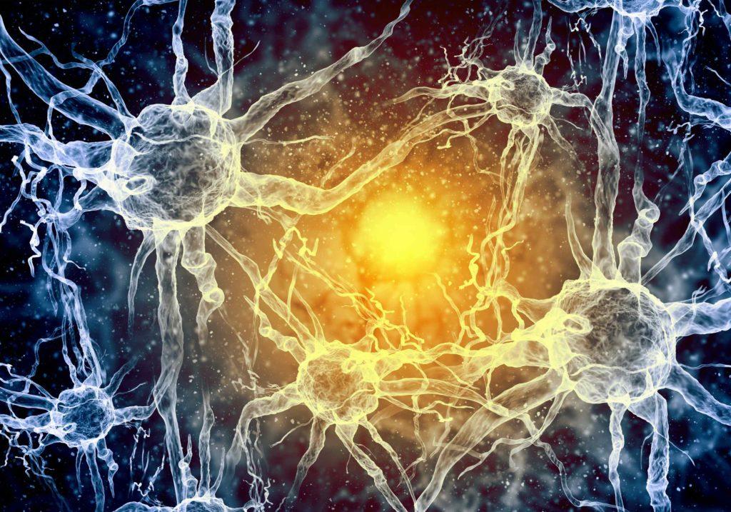 Im Gehirn bilden sich neue Nervenbahnen