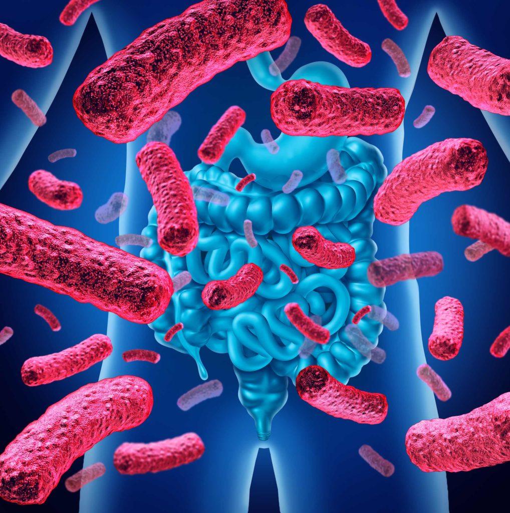 Darmbakterien sind wichtig für unsere Gesundheit