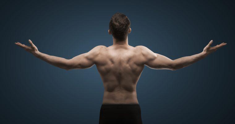 Muskelwachstum – Wie schnell geht es wirklich?