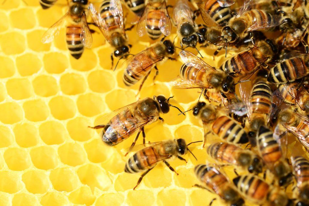 Honigbienen sollen nicht gefährdet sein
