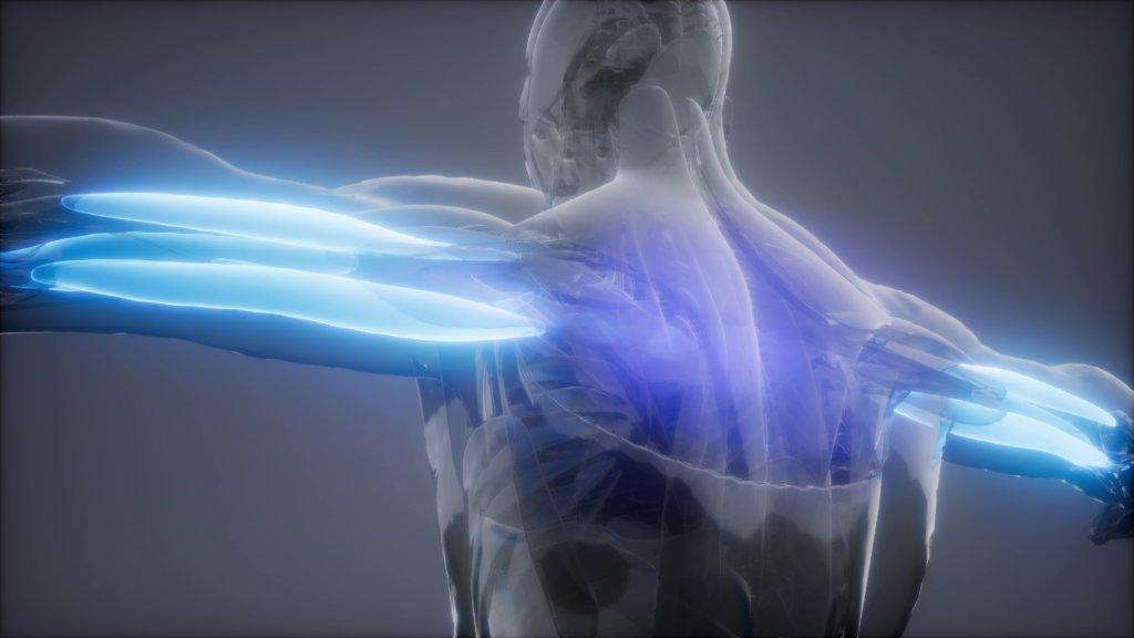 Trizepsdrücken trainiert alle drei Anteile des Trizeps