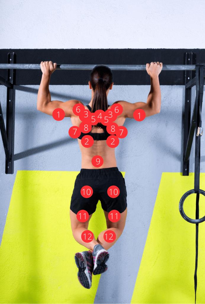 die wichtigsten Muskeln hinten
